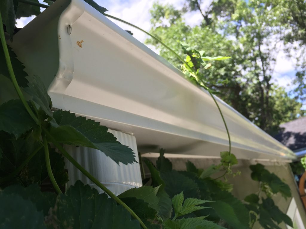 white gutters on green house
